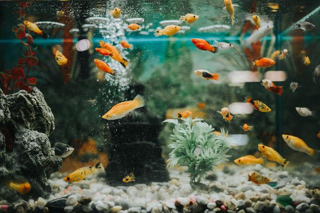 Cum am realizat RAPID un acvariu DEOSEBIT fără mari cheltuieli în 5 PAȘI