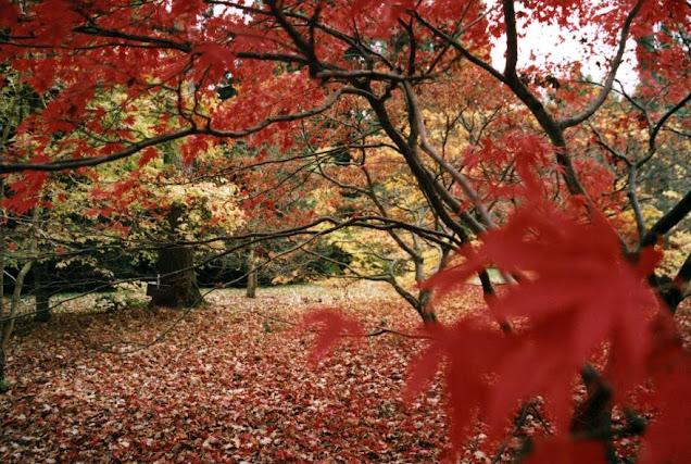 Westonbirt Arboretum (Inglaterra)