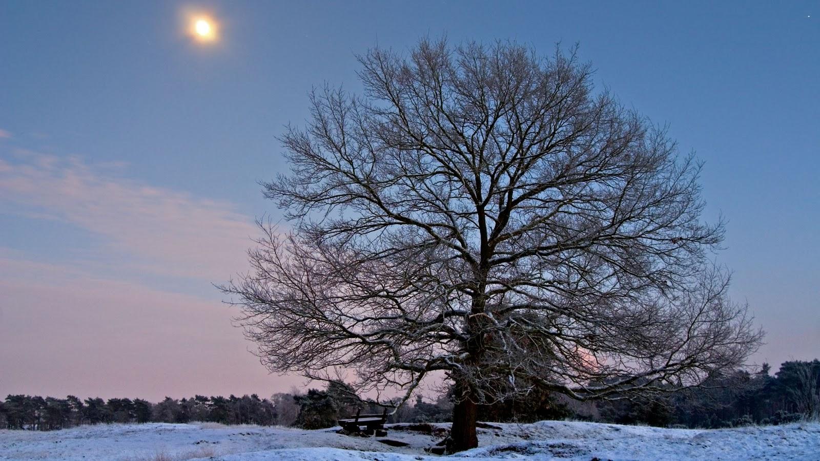 s1600 winter achtergronden winter - photo #23