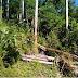 Homem morre após ser atingido por árvore no Oeste de Santa Catarina