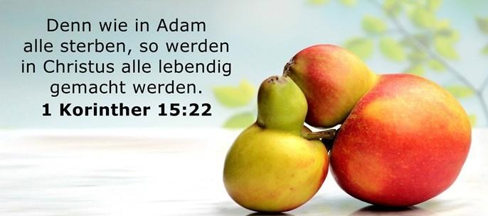 Denn wie in Adam alle sterben, so werden in Christus alle lebendig gemacht werden.