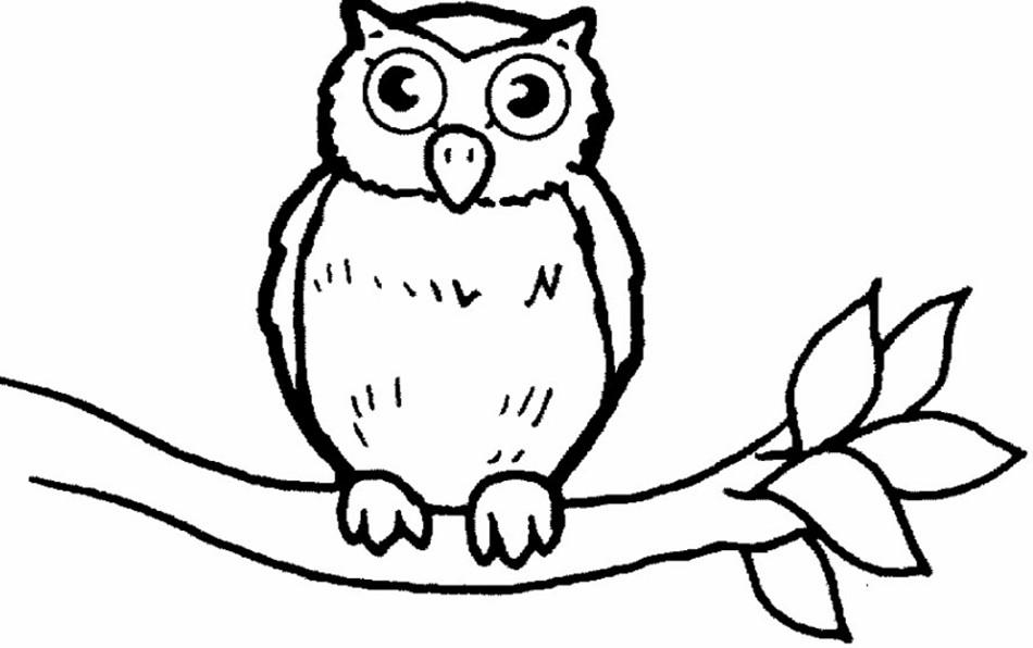 Sketsa Gambar Burung Hantu Merak Garuda Elang Gambar Mewarnai