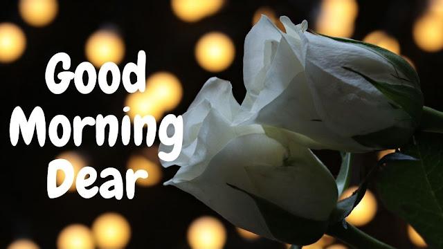 Good Morning Dear white rose Image