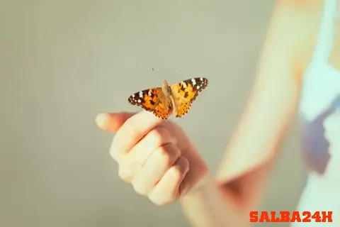 What Does It Mean If A Butterfly Lands On You – Spiritual
