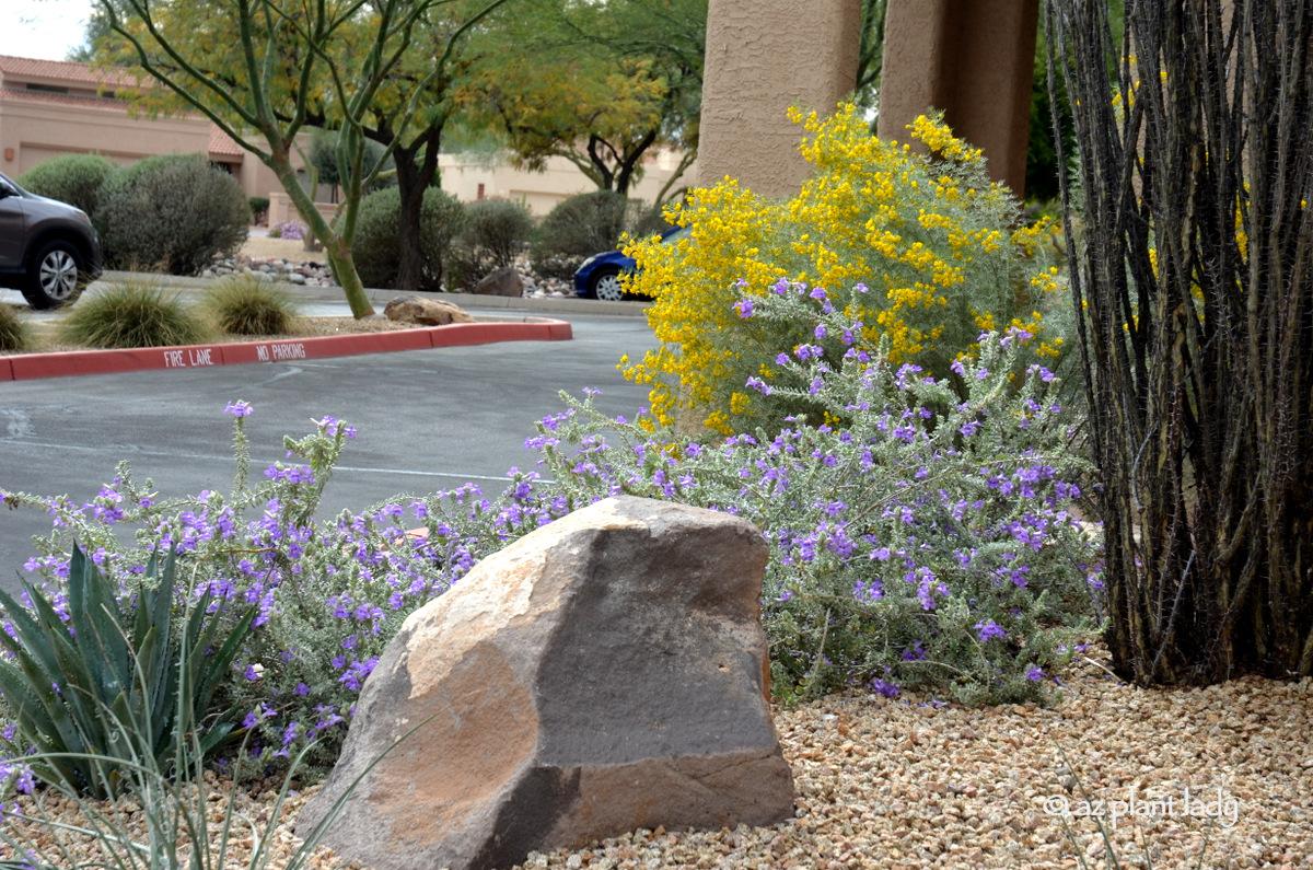 JOHN BEGNAUD: Algunas plantas cavan nuestro caliente, seco clima de W. Texas