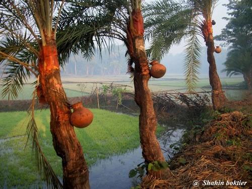 Natural beauty bangladesh essay writer