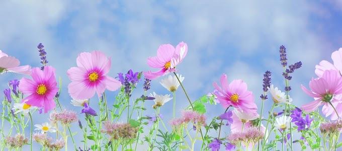Soñar con jardines