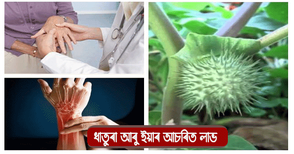 Use datura for health benefits
