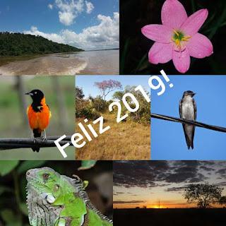 ano novo, feliz 2019, happy new year, 2019, paz, prosperidade, meio ambiente, natureza, conservação ambiental, preservação ambiental, nature, sustentabilidade