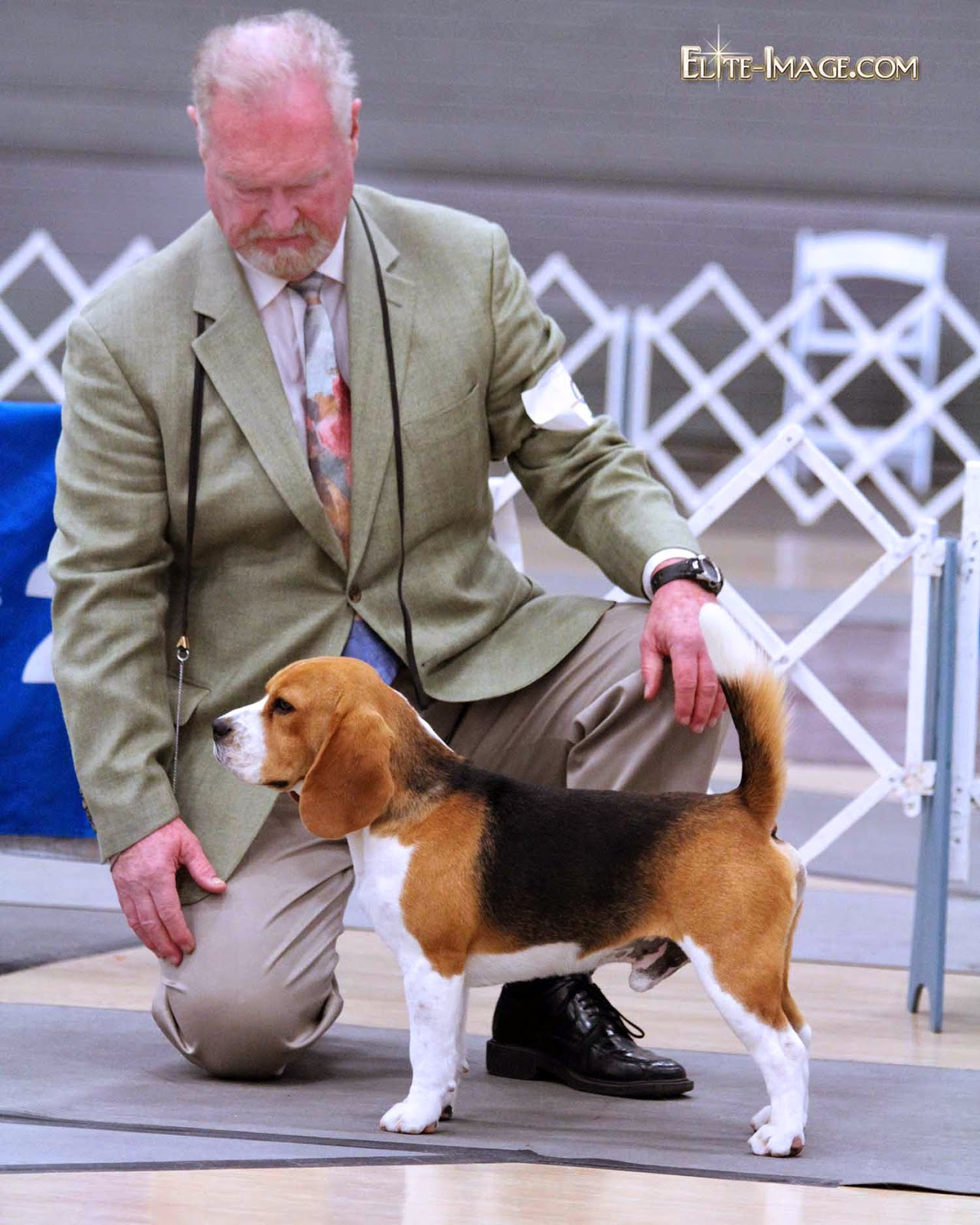 DOG SHOW POOP: PORTLAND KENNEL CLUB - photo#41