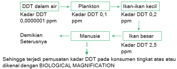 rantai aliran DDT