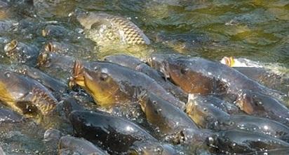 правила рыбалки в нерестовый период в ростовской