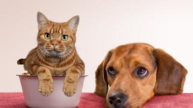 Reseña del libro Sweet Cake 30 recetas saludables para mascotas