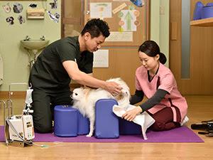 cuidados veterinários em cães idosos