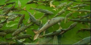 Legenda Mitos Ikan Dewa dan Pancuran 7 Keramat di Kota Cirebon Kuningan Jabar