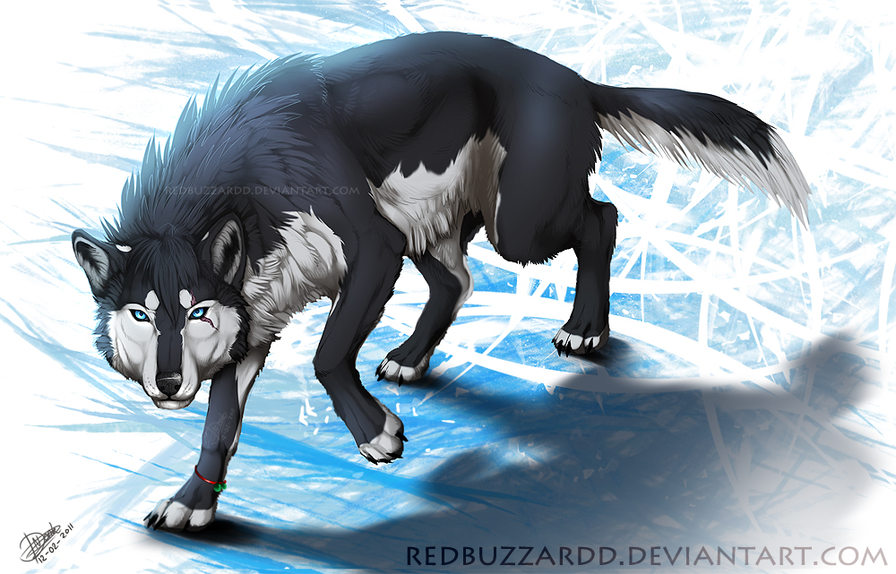 The wolf den: Wolf - Snow scarred wolf (redbuzzard)