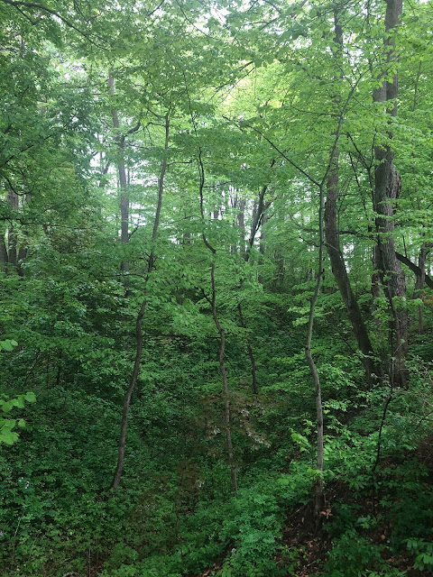 Ravines add an extra level of interest hiking at Warnimont Park.