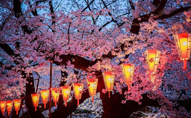 Tempat Terbaik Di Jepang Untuk Melihat Sakura