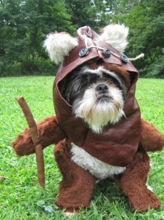 star wars pet costume-1