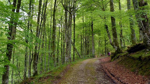 Hayedo del Río Infierno - Parque Natural de Redes - Asturias