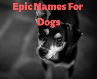 Epic Dog Names
