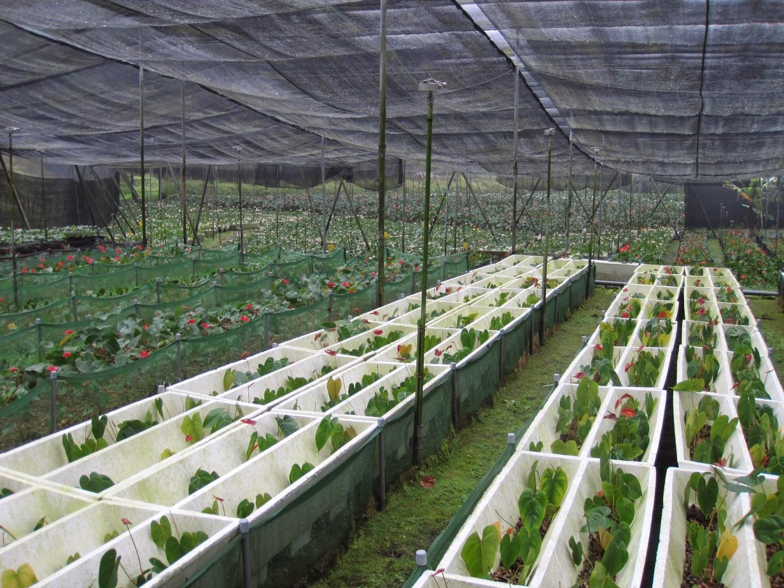 Estudiando agricultura en taiw n c scara de man for Estructura vivero