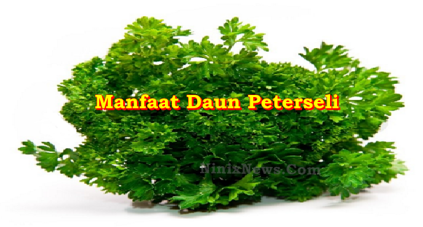 Manfaat Daun Peterseli