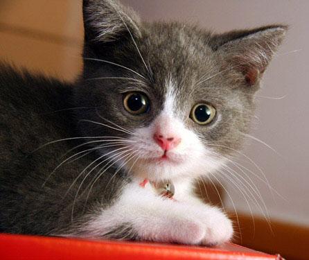 34ac927c6328 Οι γάτες δεν είναι ικανές να γευτούν το οτιδήποτε γλυκό