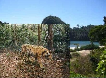 Gambar keindahan alam wsiata suaka alam Kerumutan Kepulauan Riau Indonesia