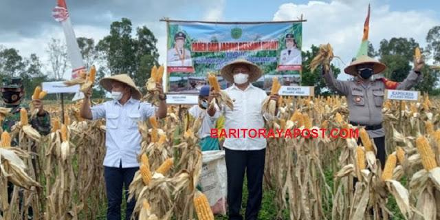 Kelompok Tani Hasrat Mulya Desa Wono Agung Panen Jagung Hibrida
