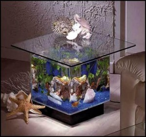 Leyendas mascotas y algo mas peceras decorativas for Como criar peces en casa para consumo