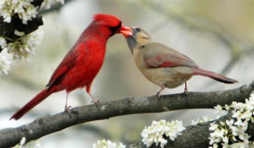 Panduan Menjaga Kesehatan Burung Peliharaan