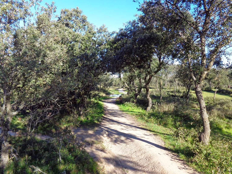 Rutas Mtb Madrid Senderos Por La Dehesa Boyal