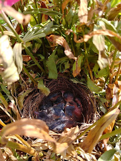 Baby birds Mitchells Nursery King North Carolina