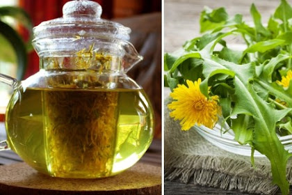 Coltsfoot – Health Benefits and Side Effects