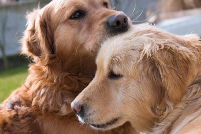 recompensas para cães