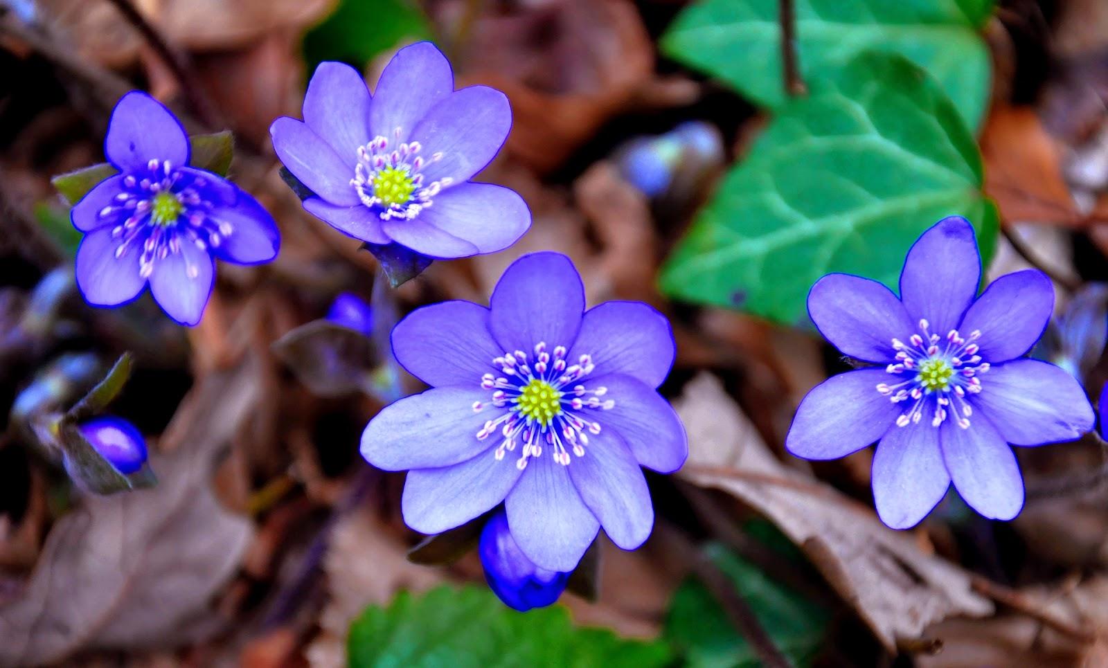 Kevät Kuvat