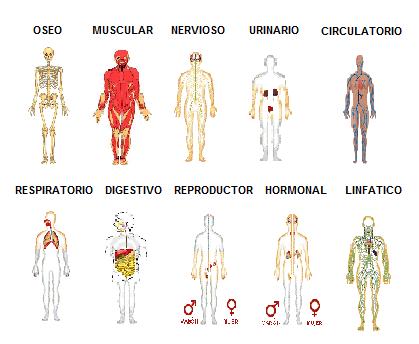 SISTEMAS Y APARATOS DEL CUERPO HUMANO: SISTEMAS Y APARATOS