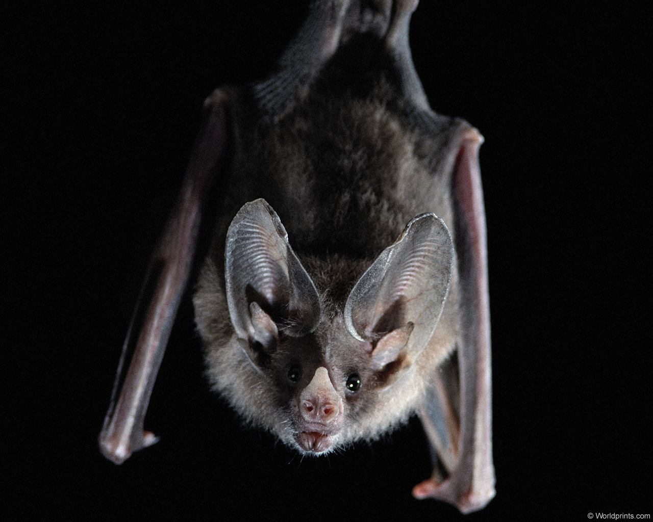 Welcome To Fun2shh World: Latest Bat Flying Animal ...