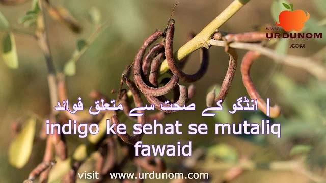 انڈگو کے صحت سے متعلق فوائد | indigo ke sehat se mutaliq fawaid