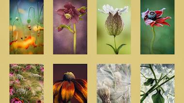 La Belleza de las Plantas IGPOTY 2014
