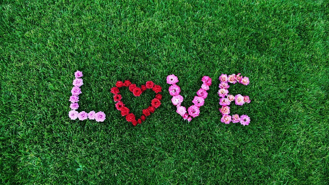 love, prato verde, fiori,