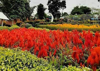 taman bunga baturaja