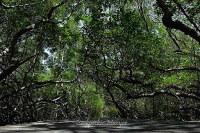 Hutan Mangrove Taman Hutan Raya Ngurah Rai Bali begitu rimbun - Backapacker Manyar