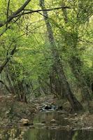 Baños de Segura, ribera Río Aguasvivas.