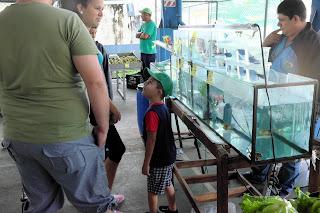 Boy at fish aquarium, Puriscal Feria