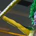 Rita Reis aparece e luta no episódio desta semana do NXT