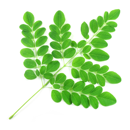 Moringa uses health benefits , side effects, daily use of