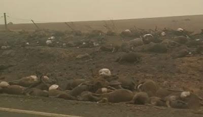 Ribuan hewan yang mati terpanggang