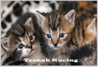 Bisnis, Bisnis Kucing, Peluang Bisnis Kucing